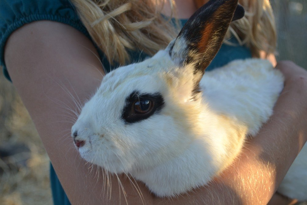 Rabbits are one of the many species of farm animals at Lighthouse Farm Sanctuary. Image courtesy Natalie VanCleave.