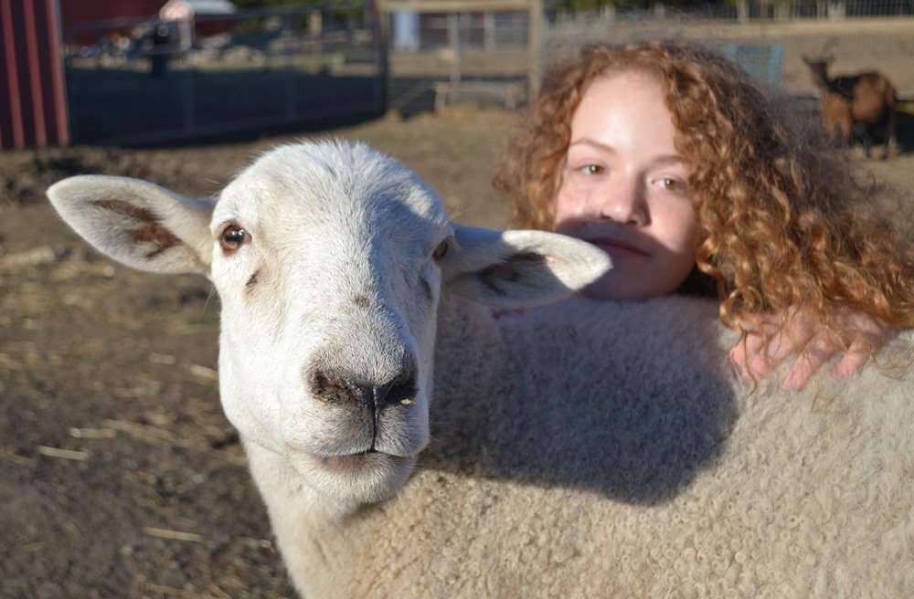 Discovering Animal Stewardship at Lighthouse Farm Sanctuary - Outdoor Families Magazine