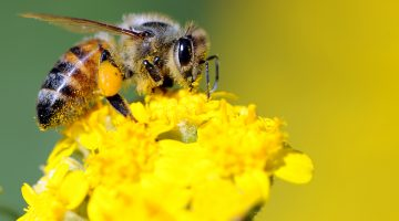 Pollinator Garden: Give bees (and other pollinators) a helping hand