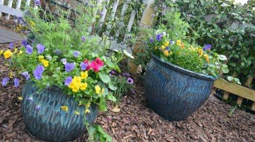 Container Gardening With Kids – Expert Advice On How To Get Started