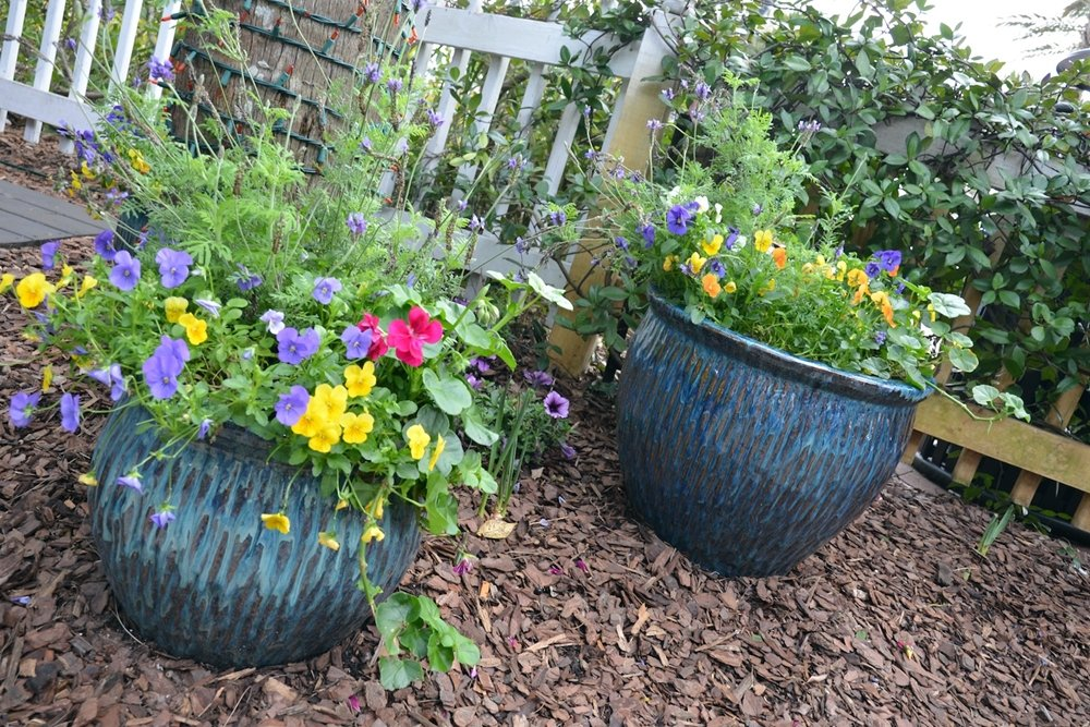 Little Green Thumbs Container gardening with kids