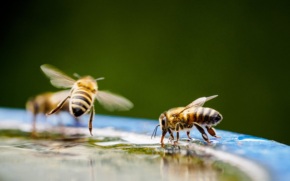 bee hotel pollinator garden tips and tricks