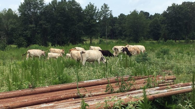Cultivating the 318 – North Louisiana's Mahaffey Farms