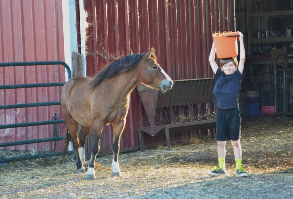 Discovering Animal Stewardship at Lighthouse Farm Sanctuary - Outdoor Families Magazine