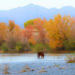 Watch for Horses at Salt River, Arizona