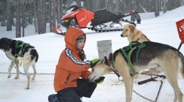 Sled-Dogging For the Suburbanite: Mushing Mt. Bachelor