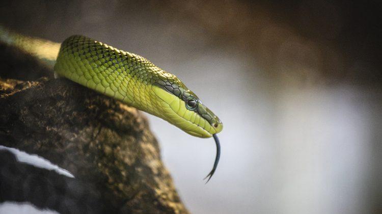 Snake Bite Prevention & Survival Guide